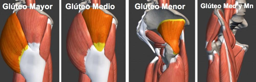 cual es la funcion del musculo gluteo mayor